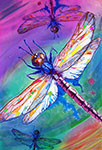 colorful dragonflys